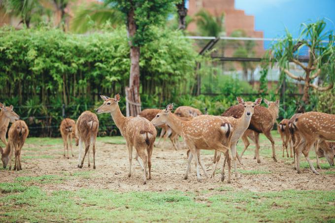 Bài 7: Có Gì Ở Trong River Safari Đầu Tiên Và Duy Nhất Tại Việt Nam? - 9