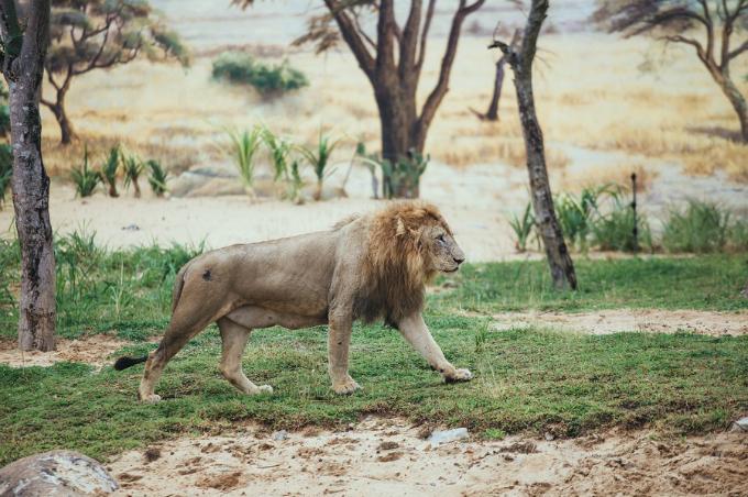 Chi phí để phát triển River Safari tốn kém và khó vận hành gấp cả chục lần so với mô hình vườn thú thông thường. Vì vậy không khó hiểu khi mô hình vườn thú trên sông trên thế giới chỉ đếm trên đầu ngón tay. Và Việt Nam đang sở hữu khu bảo tồn động vật hoang dã thuộc top lớn nhất thế giới, thuộc thiên đường giải trí Vinpearl Land Nam Hội An. Khu vườn thú này đang là thánh địa của 39 loài thú hoang dã quý hiếm với 42.000 cá thể: hổ Bengal, sư tử trắng, tê giác, linh dương, hươu cao cổ&.