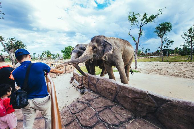 Để giữ yên tĩnh cho các chú thú tại khu bảo tồn, bạn cũng nhớ giữ bình tĩnh đừng hú lên vì thích thú khi chứng kiến những chú voi lững lờ qua sông. Hay chú hươu cao cổ ghé đầu vào mạn thuyền để xin ăn các bé. Cảm giác mới lạ mà chẳng vườn thú nào tại Việt Nam có được.
