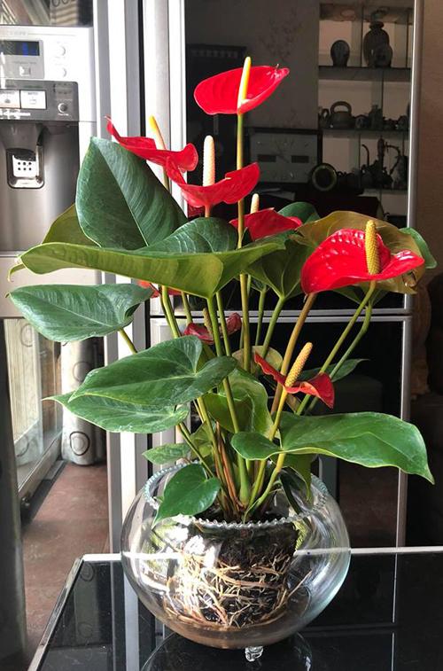 Với kinh nghiệm nhiều năm làm vườn và trồng cây trên sân thượng, chị Bùi Phương (Hà Nội) đã trồng thành công nhiều giống rau, quả đặc biệt như sung Mỹ, mướp đắng trắng Đài Loan, cà chua đen... Tuy nhiên, không dừng lại ở đó, chị Phương luôn thích thử thách bản thân với nhiều kỹ thuật trồng cây khác nhau. Cảm giác khi thử nghiệm thành công một cách trồng mới đem đến cho chị niềm vui trong cuộc sống.