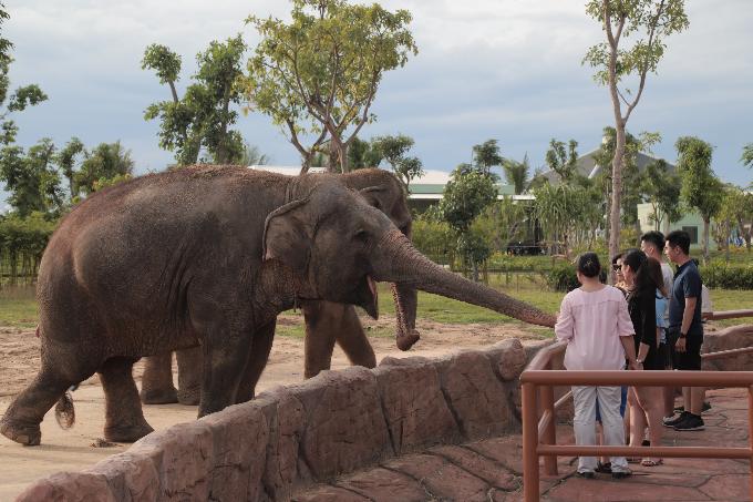 Khoảnh khắc chú voi Misa trêu đùa du khách tại safari.