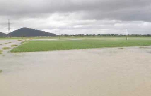 Nhiều diện tích lúa ở Nghệ An bị lút sau nhiều ngày mưa lớn. Ảnh: Anh Thư.