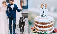 Ý tưởng trang trí hôn lễ cho cặp yêu thú cưng