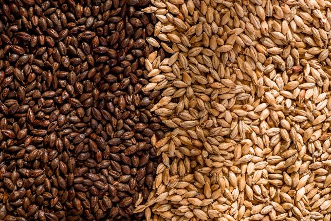 Đồ uống từ mầm lúa mạch lên men tự nhiên