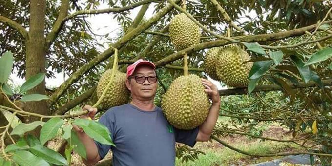 Nông dân Thái bán đấu giá quả sầu riêng nặng 18 kg