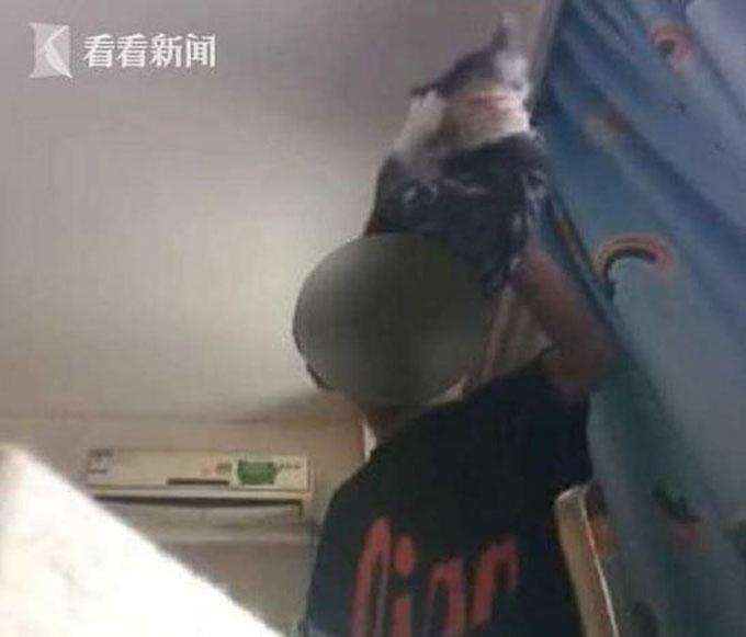 Con mèo bị nam thanh niên tra tấn đến chết sau khi bạn gái anh ta không chịu nối lại tình cảm. Ảnh: AsiaOne.