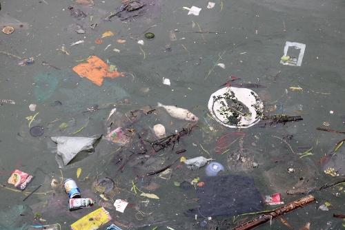 Cá biển chết nổi hòa lẫn trong rác thải. Ảnh: Giang Chinh