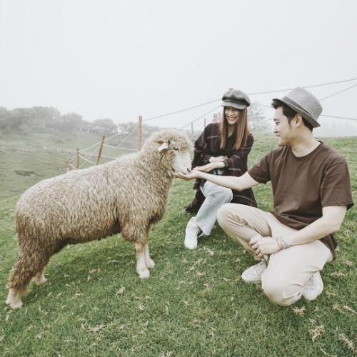 Ca sĩ Quang Vinh và Diễm My tạo dáng chụp ảnh bên cừu trong chuyến du lịch ở Đài Loan.
