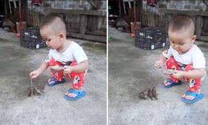 Bé trai 2 tuổi cần mẫn bón đồ ăn cho đàn chim