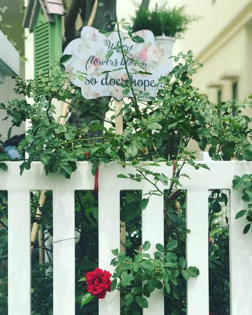 Bụi hoa hồng leo bên hàng rào trắng gợi sự liên tưởng đến vẻ đẹp lãng mạn, bay bổng của Pháp.