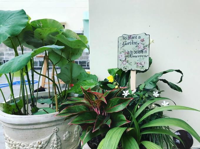 Gây dựng một khu vườn là tin vào ngày mai - thông điệp nhỏ giúp các bé yêu hơn công việc trồng cây.