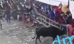 Ông lão mất mạng khi bảo vệ vợ khỏi bò tót tấn công