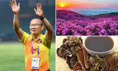 Quê hương giàu truyền thống Đông y của HLV Park Hang-seo