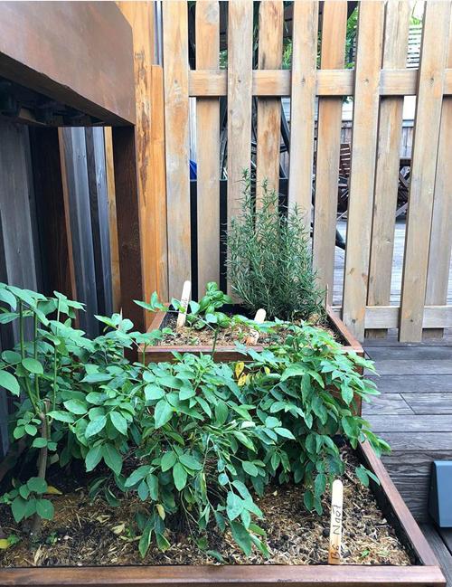 Riêng đối với rosemaryvà basil, hai loại cây gia vì mà nhiều người trồng không thành công, Tăng Thanh Hà cho rằng vị trí đặt cây ở nơi có nhiều nắng sẽ quyết định thành công.