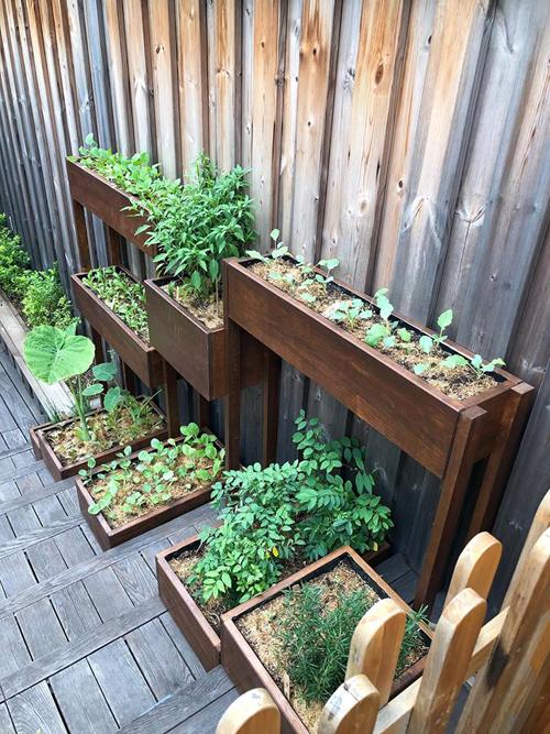 Bà mẹ hai con chọn trồng những loại rau ăn lá quen thuộc như rau ngót, cải, muống, dọc mùng... và một số rau gia vị như rosemary, basil, ớt chỉ thiên...