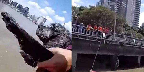 Con chó và người phụ nữ được cứu lên bờ an toàn. Ảnh: Shanghaiist.