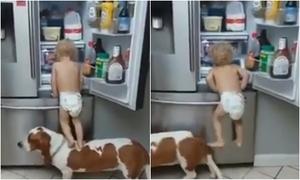 Em bé mặc bỉm 'bắt tay' cùng chú chó đột nhập tủ lạnh