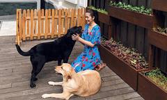 Ảnh hot 8/9: Tăng Thanh Hà thảnh thơi chơi đùa cùng chó cưng