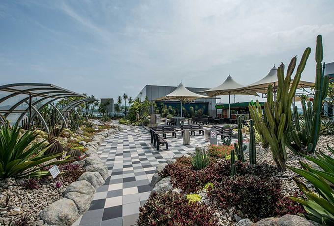 Cũng trên sân thượng, người ta cho xây dựng một vườn bách thảo với rất nhiều loại lan đặc trưng của Singapore, các loại xương rồng kích thước lớn trong không gian thoáng đãng, rộng rãi.