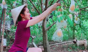 Ảnh hot 10/9: Lê Phương hái khế trong vườn quê