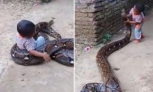 Bố mẹ thích thú quay video con trai chơi đùa với trăn khổng lồ