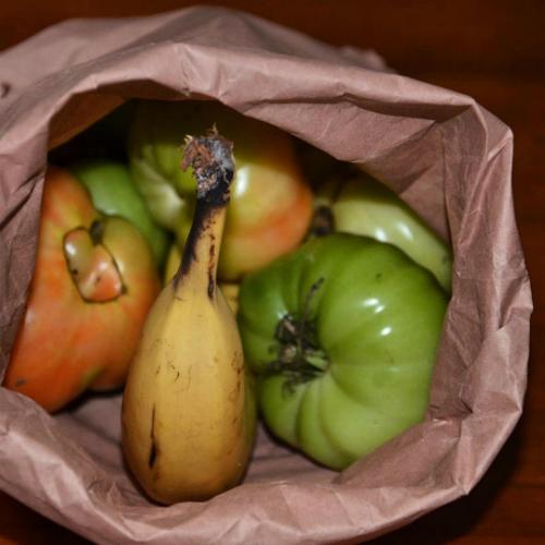 Cách giúp hoa quả nhanh chín.
