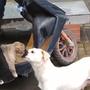 Chó mẹ mắt ngấn lệ khi hôn tạm biệt con nhỏ