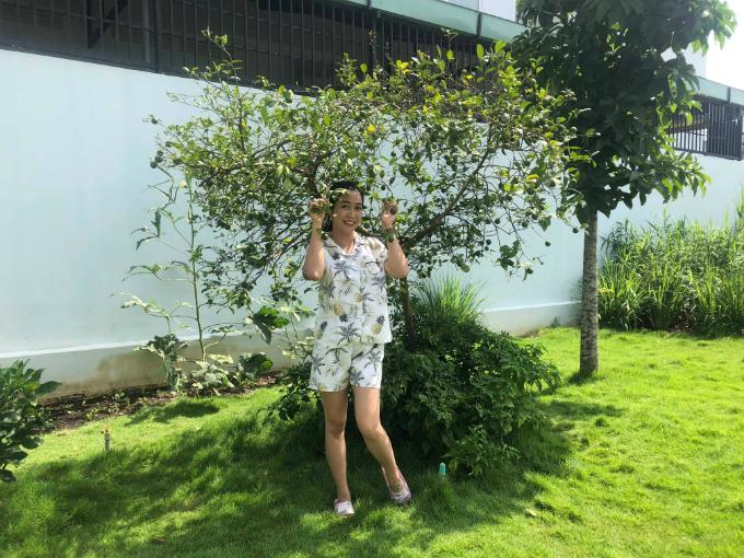 Cây chanh xum xuê trái ở góc vườn nhà Ốc Thanh Vân.