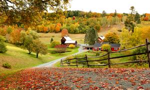 Những trải nghiệm mùa thu ở 'trời Tây'