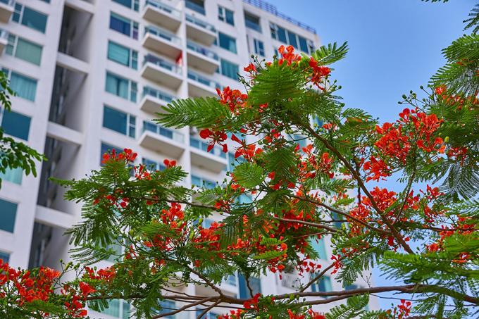 Green Bay Garden thừa hưởng mô hình quản lý chuyên nghiệp nhất quán từ Green Bay Village với tiêu chuẩn quản lý quốc tế, hệ thống an ninh đa lớp mang đến cho cư dân cuộc sống an toàn đồng thời góp phần làm gia tăng giá trị của bất động sản.