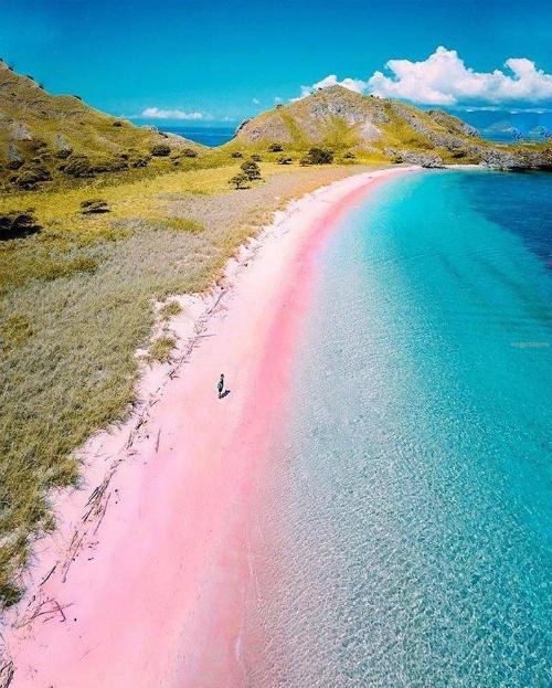 Bãi biển hồng không quá xa lạ với những người mê du lịch nhưng bạn sẽ ngạc nhiên khi biết chỉ cách Việt Nam vài giờ bay cũng có một địa điểm thần tiên như vậy. Đó là bãi biển ở đảo Komodo (Indonesia), nằm trong quần thể vườn quốc gia Komodo nổi tiếng,  di sản thế giới được UNESCO công nhận năm 1991.