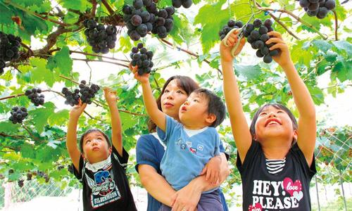 Mùa thu đi hái hoa quả đã đời ở Ibaraki, Nhật Bản