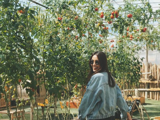 Tăng Thanh Hà thích thú khi được chụp hình dưới dàn cà chua trĩu quả.