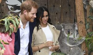 Meghan cười khúc khích khi thăm vườn thú với chồng
