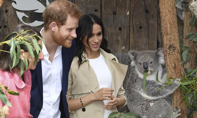 Vợ chồng Harry được các chuyên gia nhân giống dẫn đi thăm chuồng của koala - loài gấu túi nổi tiếng của Australia.