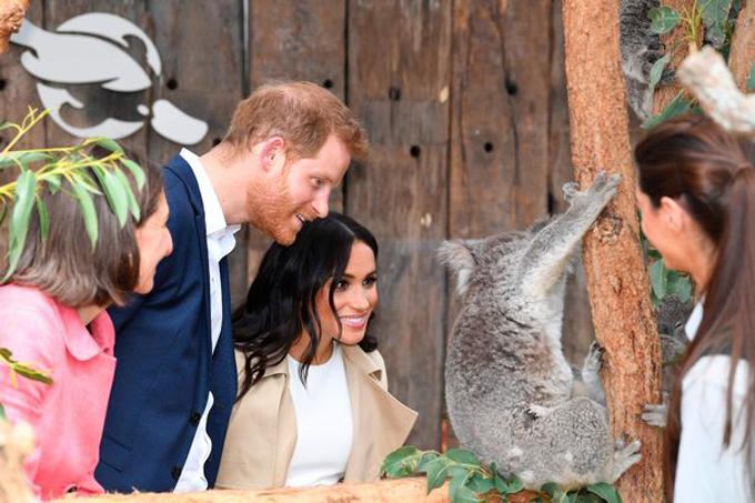 Meghan dường như không hề ngại tiếp xúc với động vật hoang dã dù đang mang bầu.