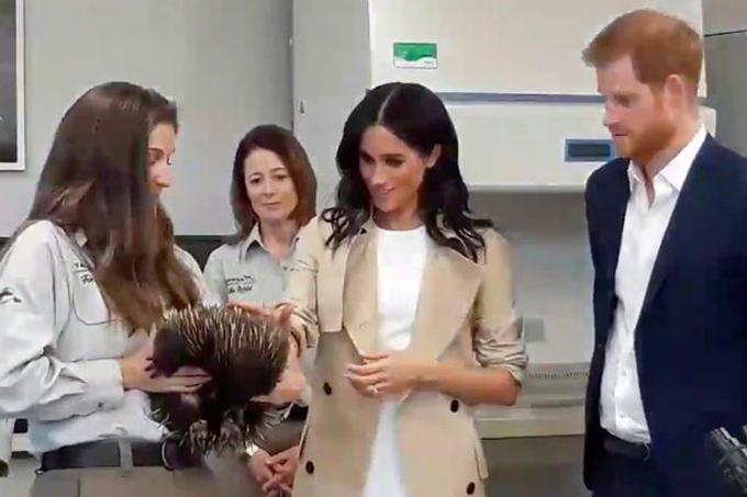 Meghan thử sờ vào lông của một con nhím trong phòng thí nghiệm. Hình ảnh này gợi cho người hâm mộ nhớ tới việc Meghan quỳ gối vỗ về một con chó bên lề đường trong chuyến thăm Sussex hồi đầu tháng này.