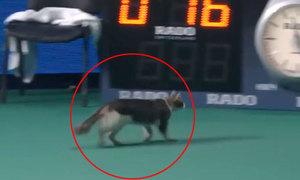 Mèo lọt vào sân ở giải tennis WTA tại Nga