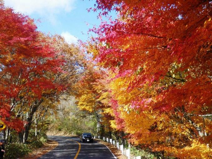 Bức tranh mùa thu ở con đường nguy hiểm bậc nhất Nhật Bản - 5