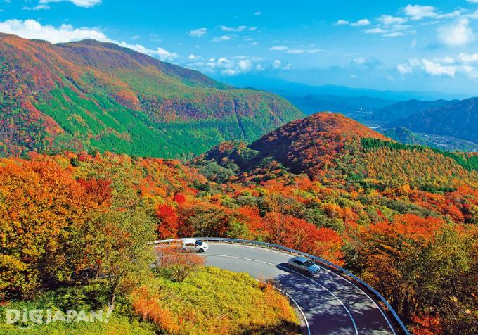 Bức tranh mùa thu ở con đường nguy hiểm bậc nhất Nhật Bản - 3
