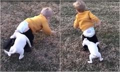 Bé trai cuống cuồng bỏ chạy vì bị chú cún lột quần
