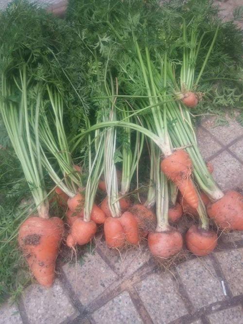 Hiện tại, trên mái tôn, anh chị đặt khoảng 30 hộp xốp, 25 chậu nhựa và các can dầu ăn, xà phòng cũng được tận dụng để trồng rau. Dưới sân, anh chị có khoảng 15 chậu trồng cây cảnh, ngoài cổng thì có 10 hộp xốp to, trên tường treo nhiều chậu nhỏ, nồi hỏng, bát nhựa trồng rau thơm, các ống nước được treo đứng để trồng mùi tàu, rau cải...