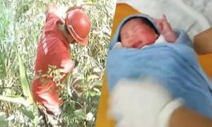 Bé sơ sinh thoát chết nhờ tán cây sau khi bị bố ném từ trên núi