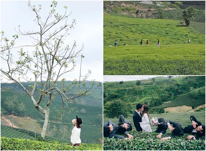 Gợi ý cung đường săn dã quỳ - vườn hồng - chè xanh ở Đà Lạt trong một ngày - 1