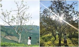 Một ngày 'săn' dã quỳ - vườn hồng - chè xanh ở Đà Lạt