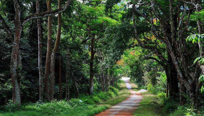 Vườn quốc gia Ba Vì: Hàng nghìn cây xanh trong khu vườn đặc biệt với diện tích lên tới 11.460 ha đem đến cho du khách bầu không khí trong lành. Mùa này rừng đổ vàng sắc lá, ảo diệu như ở trời Tây. Các bạn trẻ có thể tới đây chụp ảnh sống ảo, những cặp đôi hay các cô dâu - chú rể có thể thực hiện bộ ảnh lãng mạn.