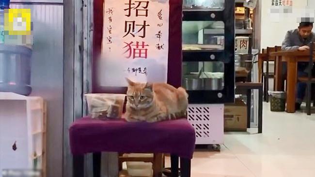 Con mèo may mắn ở cửa hàng thực phẩm tại thành phố Tây An, tỉnh Thiểm Tây, Trung Quốc. Ảnh: Pear Video.