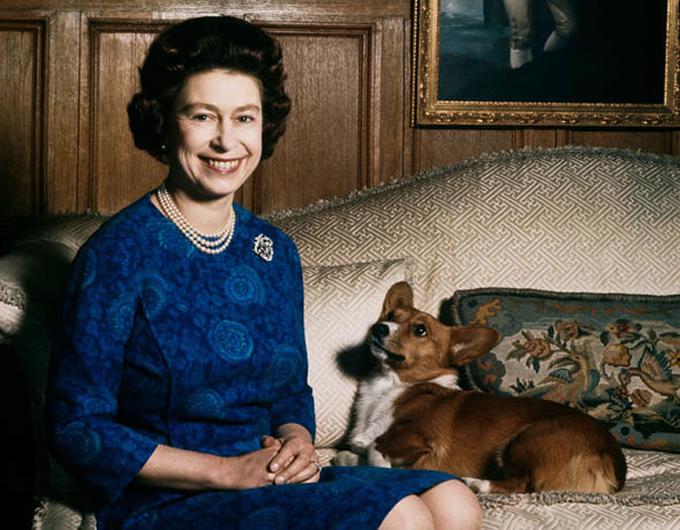 Nữ hoàng Elizabeth là một người yêu chó, bà đã nuôi khoản 30 con corgi trong suốt nhiều năm qua. Ảnh: UK Press.