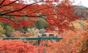 Ngắm lá đỏ rực rỡ ở nơi không phải chen chúc ngay gần Tokyo