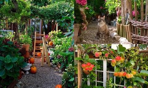 Bà mẹ thợ may trồng rau, nuôi gà trong 'khu vườn cổ tích'